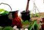Тайские бальзамы как лекарство от многих недугов